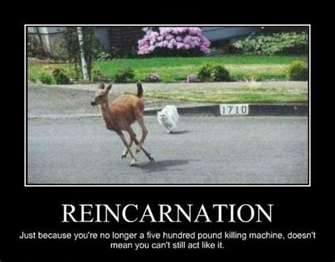 reincarnation cat meme   cat pla  cat pla