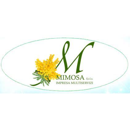 imprese di pulizie pavia preventivo per impresa di pulizie mimosa pavia
