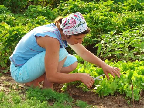 How To Grow A Vegetable Garden In An Apartment How To Grow A Vegetable Garden Slideshow