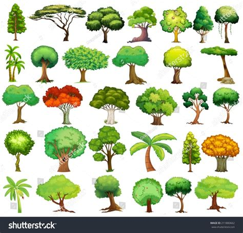 different color trees image gallery names of trees