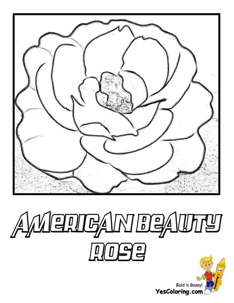 rose flowers coloring pages  yescoloring rose