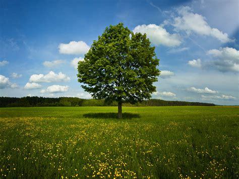 The Field wallpaper tree in field