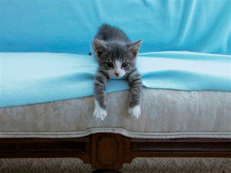how to get cat pee out of couch how to get rid of cat pee smell on furniture best