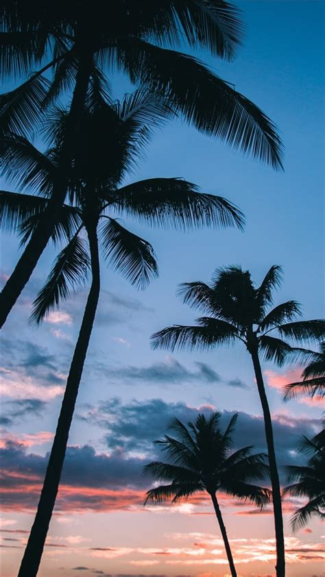 palm trees  paradise iphone  wallpapers