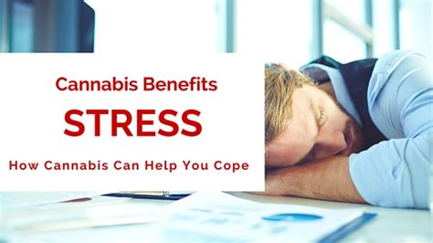 can marijuana cause mood swings how marijuana affects stress greenito