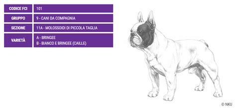 bulldog francese alimentazione bulldog francese carattere e prezzo razze cani dogalize