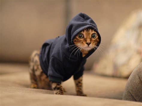 Top 10 Gadgets Of 2017 cats in hoodies