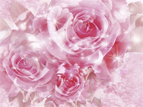 wallpaper pink rose special pink roses wallpaper background imagebank biz