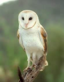 What Do Barn Owls Eat Alexander Sirius Black Harry Potter The New Generation