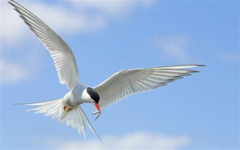 imagenes de karma bird fly wallpaper birds flying sky wings flap hd picture image
