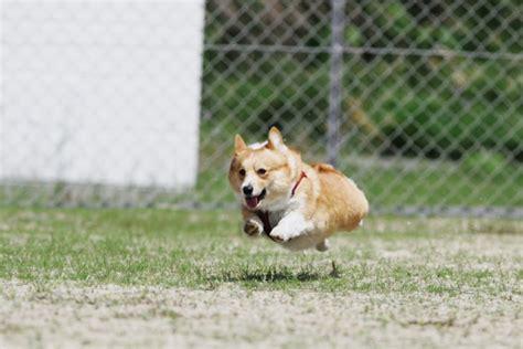 puppies running running pupsmile