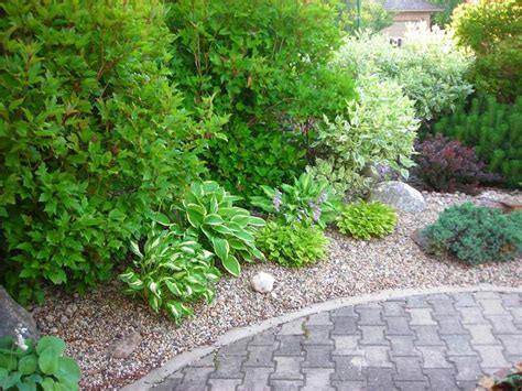 evergreen shrub border beautiful yard ideas pinterest