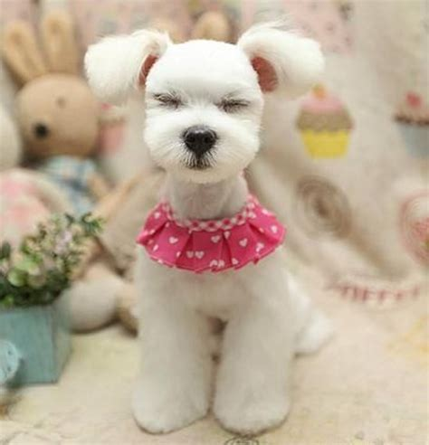 asian cuts for dogs 30 different dog grooming styles tail and fur