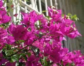 Shrubs With Flowers - flowering shrubs nightingale trails