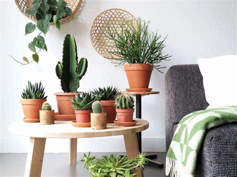 foto piante grasse da appartamento piante grasse da appartamento ecco le succulente pi 249
