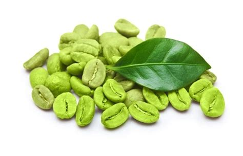 Biji Kopi Coffee Beans Unroasted Green Dit By Lada Akumandiri 생두 그린커피빈 이 가진 다이어트의 비밀을 캐다 건강 gt 기사 the fact