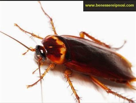 blatte rosse volanti cosa significa sognare gli scarafaggi significato dei