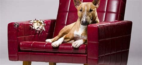 dog friendly couches is that couch or sofa pet friendly