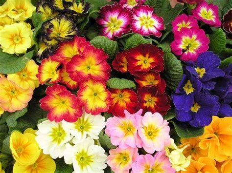 fiori da giardino fiori da giardino perenni foto tempo libero pourfemme