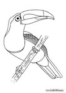 toucan coloring page keel billed toucan coloring pages hellokids