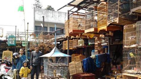 Harga Pollard Cap Angsa Hari Ini peluang usaha sentra burung sukahaji bandung jawa barat