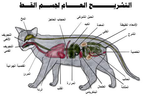 cat sections رحال voyager القط التشريح والوظائف الخارجية