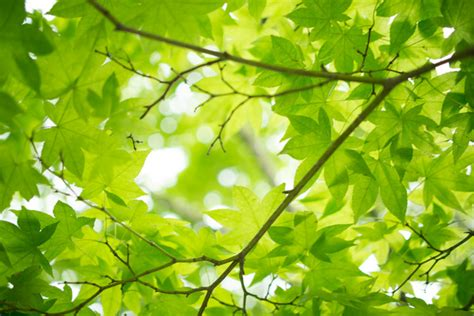 high resolution maple leaf deviantart fresh free stock photos download 1 762 free stock photos