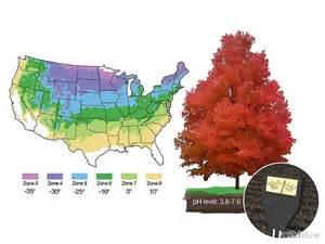 how many states grow trees blogs 171 galaxy dreams