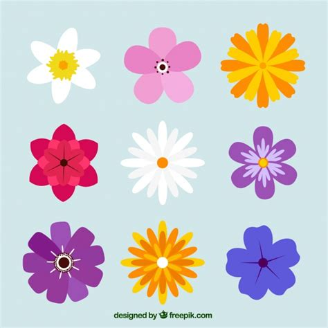 colored flowers variety of pretty colored flowers vector free