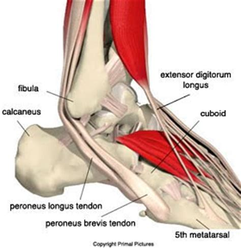 Center For Foot And Ankle Surgery Peroneal Tendinopathy