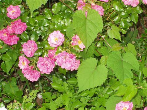flowers photos flower photos