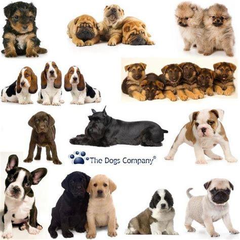 Perros Todas Clases | fotos de todas las clases de perros imagui
