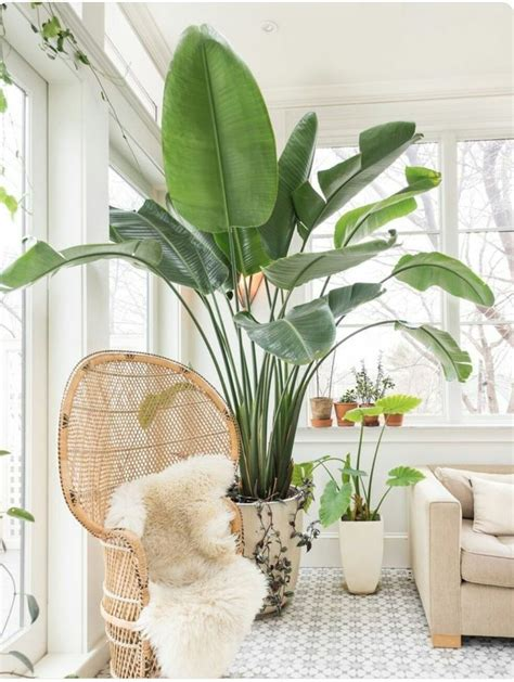 25 best ideas about large indoor plants on