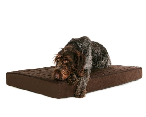 best dog house for large dogs orthopedic dog beds for extra large dogs doherty house best dog beds and costumes
