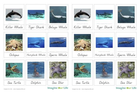 Animals Of The Ocean For The Montessori Wall Map | animals of the ocean for the montessori wall map