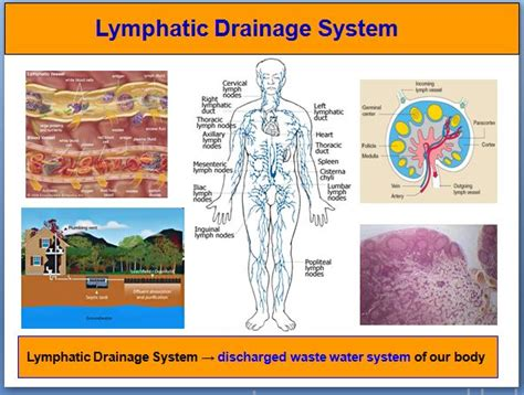 icd 10 code for enlarged lymph nodes 245 best images about lymphatic health on pinterest non
