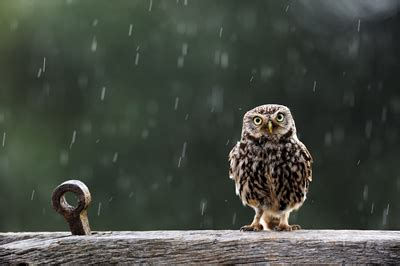 british wildlife photography awards call for entries