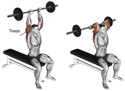triceps extension bench press few barbell exercises to train your triceps lifestyle interest
