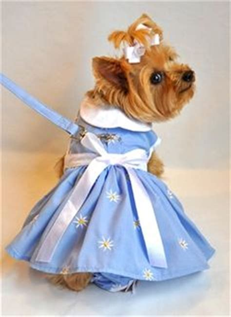 yorkie clothes and accessories 1000 images about yorkie on yorkie yorkies and dresses