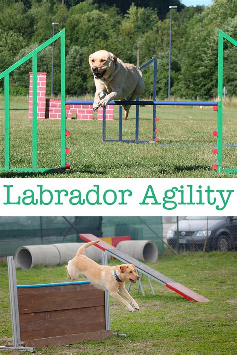 agility course near me when can i start my puppy for agility photo