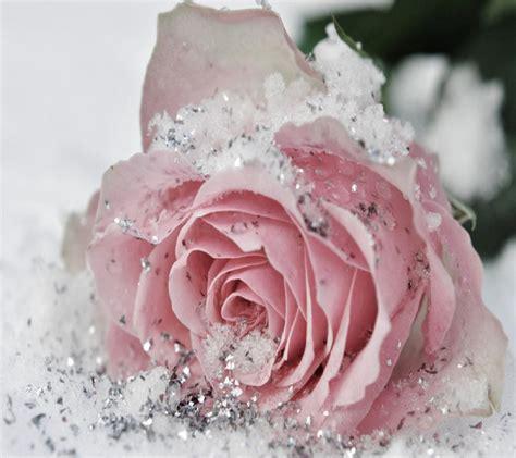 glitter wallpapers of flowers flowers pink lovely white sweet glitter beautiful rose