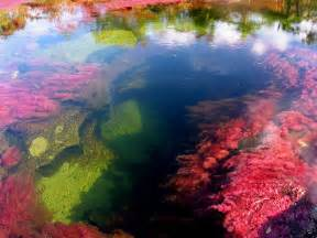 the river of five colors cano cristales colombia