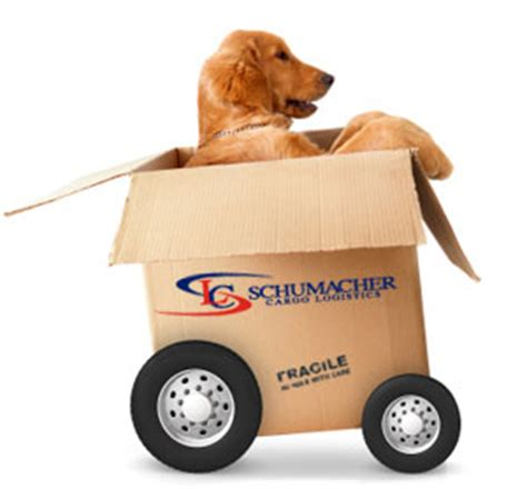 puppy shipping services international pet moving pet relocation transport information