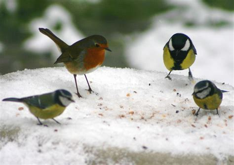 Home Welcoming Gifts Birds Feeding In Snow By Nickodoherty At Flickr Orange
