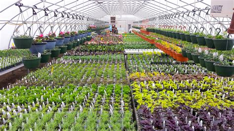 Greenhouse Garden Center by Garden Center Gallery Forever Green Iowa City Coralville