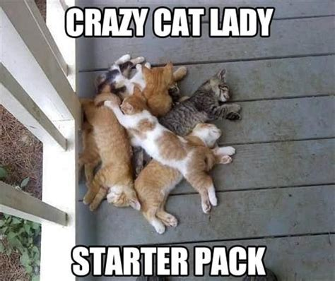 Crazy Cat Lady Meme - hey i just met you and this is crazy funny animal meme