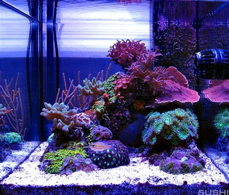 Marine Aquarium Aquascaping by 54 Best Images About Saltwater Aquarium On