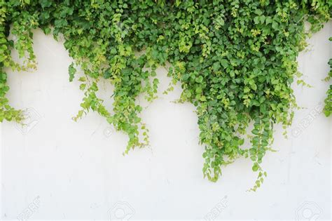 vine wallpaper for walls chinese fishing village is conquered by ivy daily news