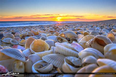 Bathtub Reef Beach Seashells At The Beach Stuart Florida