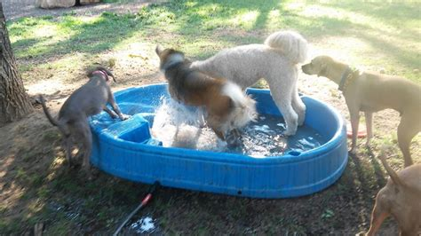kiddie pool for dogs vint hill park holds fundraising social bristow beat bristow beat